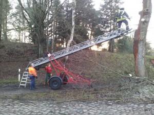 Baumrückschritt mit Leiter